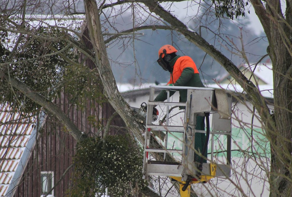 Pruning Trees in Minnesota